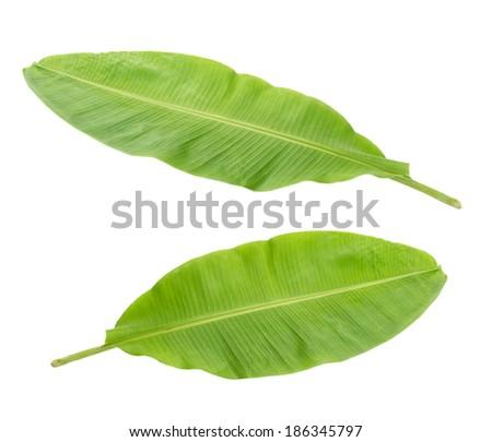 Fresh Banana Leaf Isolated  - stock photo