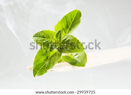 Fresh basil - stock photo