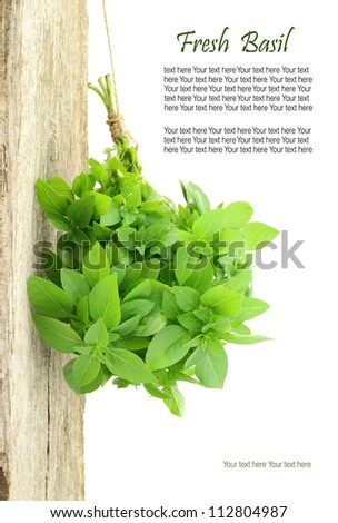 Fresh basil hanging from a rope with copy space - stock photo