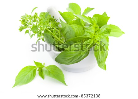 Fresh basil  herbs whith mortar and pestle / isolated on white - stock photo