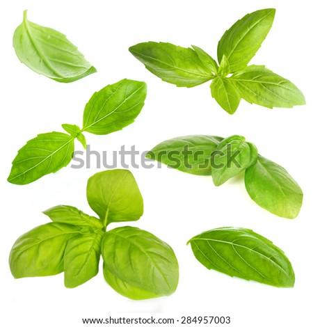 Fresh basil isolated on white - stock photo