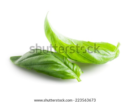 Fresh basil leaves in closeup - stock photo