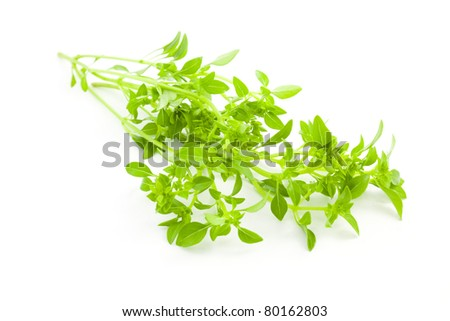 Fresh Basil / spice herb on white background - stock photo