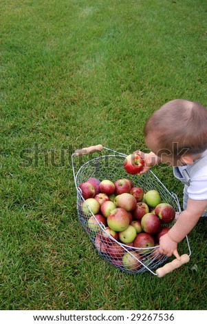 Fresh basket of apples with young child choosing one. - stock photo
