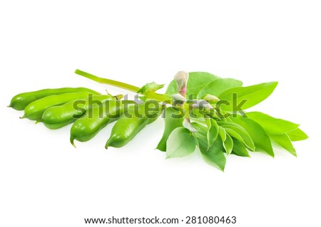 Fresh beans with leaves isolated on white. - stock photo