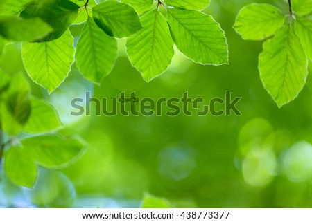 Fresh beech leaves background, shallow depth of field - stock photo