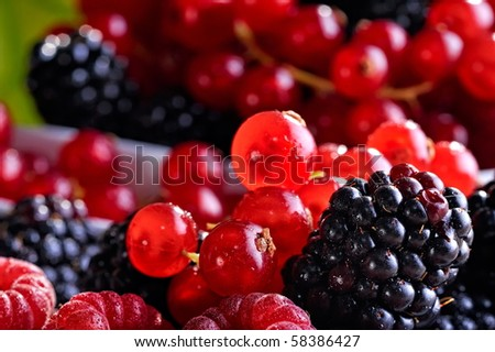 fresh berry fruits - stock photo