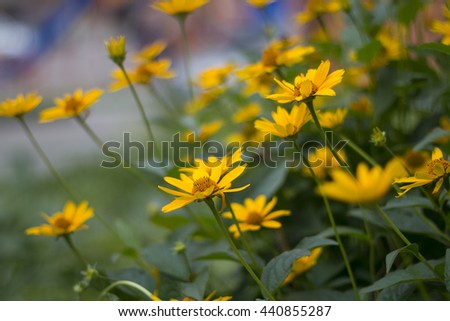 fresh blooming yellow flowers - stock photo