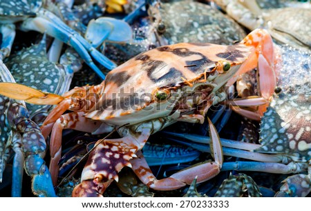 Fresh blue and red crab is difference  at a seafood market. - stock photo