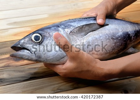 fresh blue fin tuna from market in hands and dark photo in sunlight - stock photo