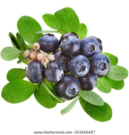 Fresh  blueberries with flowers isolated on a white background - stock photo
