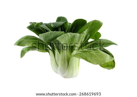 Fresh bokchoy isolated in white background. - stock photo