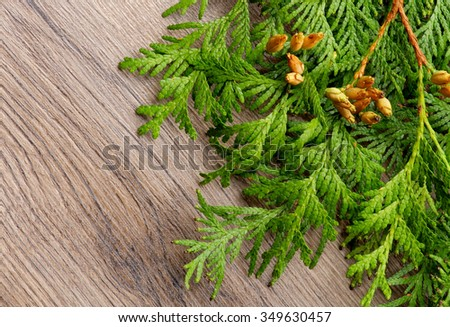 Fresh Branches and Cones of Thuja closeup on Textured Wooden background as Christmas Decoration Theme - stock photo