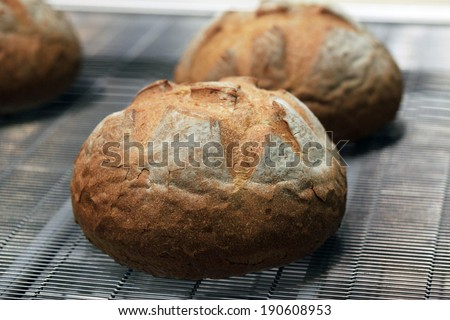 fresh bread on the line from the stove - stock photo