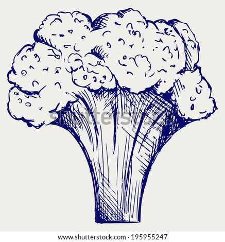 Fresh broccoli. Doodle style. Raster version - stock photo