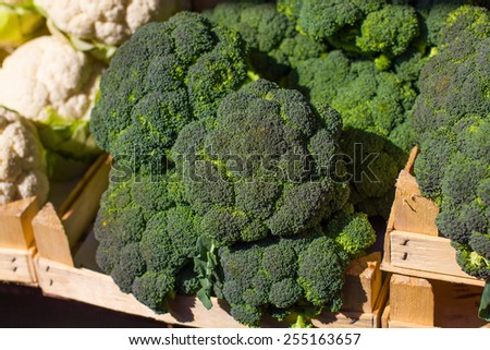 Fresh Broccoli ready for sale on the farmers market. - stock photo