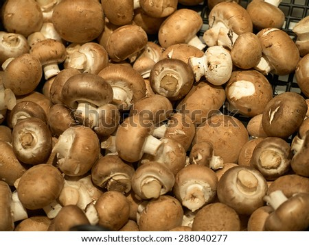Fresh brown champignon mushroom on display for sale in a store - stock photo