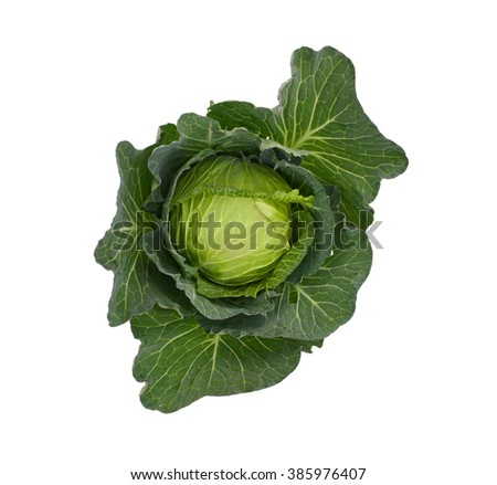 Fresh cabbage isolated on white - stock photo