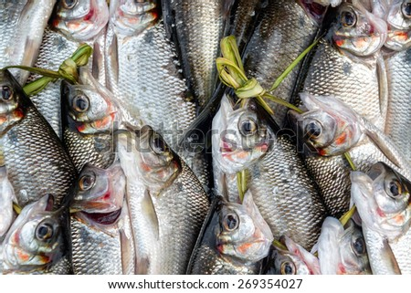 Fresh caught fish in a market in Iquitos, Peru in the Amazon Rainforest - stock photo
