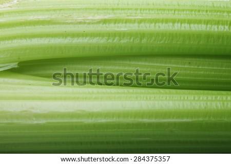 fresh celery on a white background, food background - stock photo