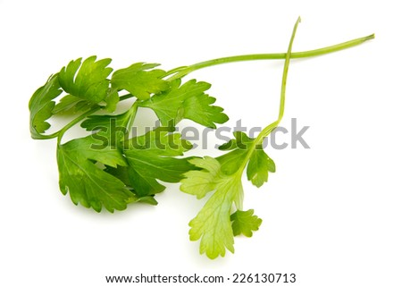 Fresh celery seen up close on a white background - stock photo