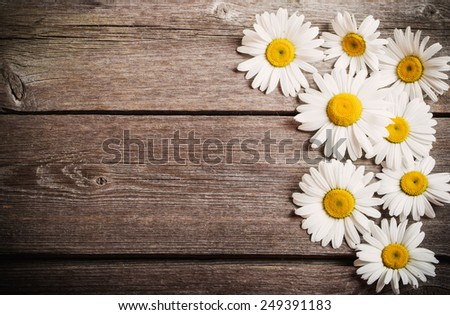 Fresh chamomile flowers on the wooden table - stock photo