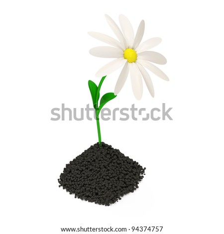 Fresh Chamomile Growing in Soil isolated on white background - stock photo