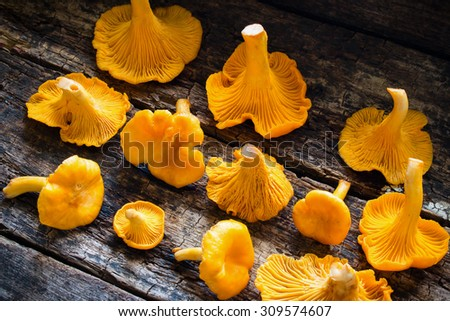 Fresh chanterelle on a wooden background side view - stock photo