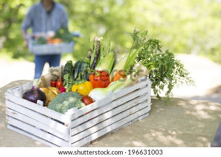 Fresh chemical-free vegetables you harvest - stock photo