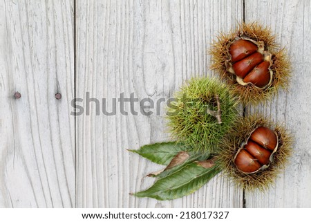 fresh chestnuts bur on a wooden background - stock photo