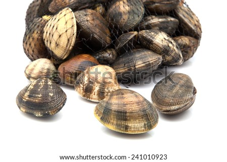 fresh clams group on white background - stock photo