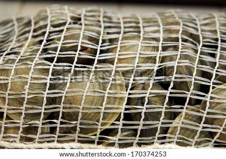 Fresh clams in mesh seafood bag - stock photo