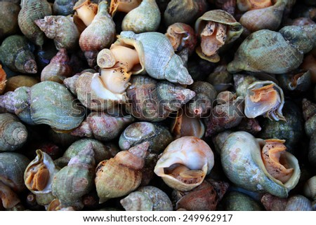 Fresh cockles at the market  - stock photo