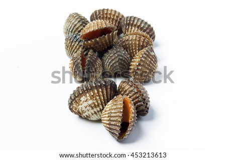 Fresh cockles so delicious on white background  - stock photo