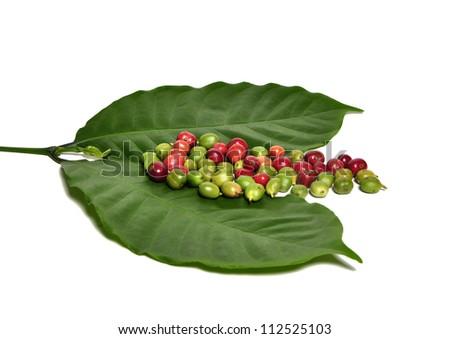 Fresh coffee beans - stock photo