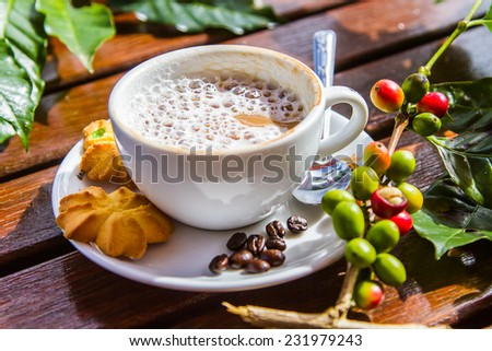 Fresh coffee beans and coffee to bread. - stock photo