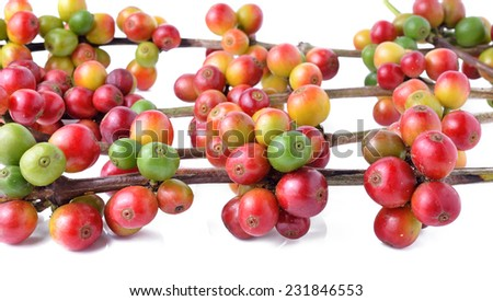 Fresh coffee beans isolated on white background - stock photo
