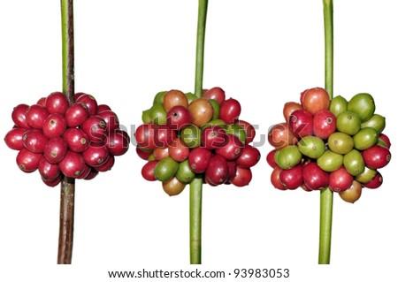 Fresh coffee beans on white - stock photo