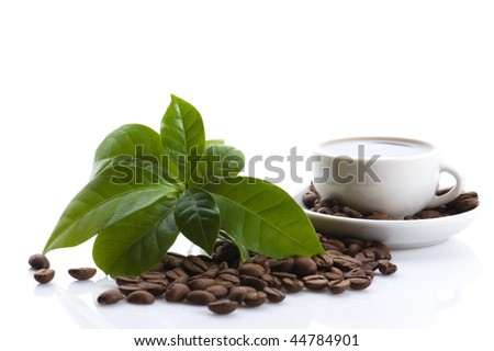 fresh coffee with coffee branch - stock photo