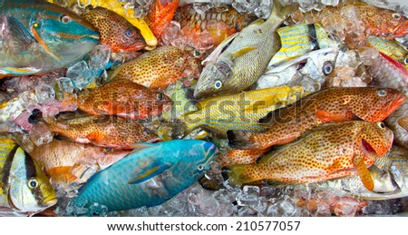 Fresh colorful tropical fish on ice - stock photo