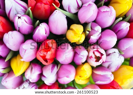 Fresh colorful tulips- nature spring background. Soft focus and bokeh - stock photo