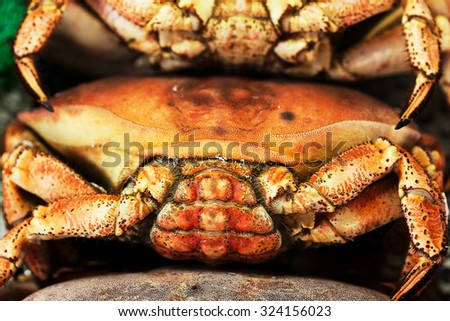 Fresh cooked crabs at europe fish market - stock photo
