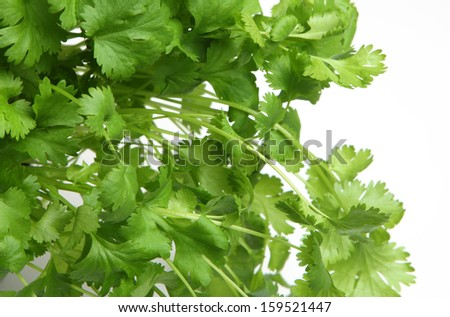 Fresh coriander or cilantro herb on white background - stock photo