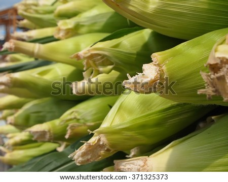 Fresh corn cobbs in husks stacked in a roadside display at a local farmer's market.  - stock photo