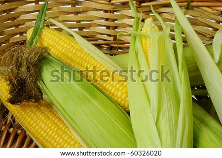 Fresh corn cobs in a basket closeup - stock photo