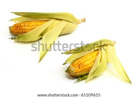 Fresh corn isoalted on white - stock photo
