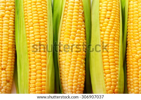 Fresh corn on cob, closeup - stock photo