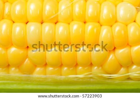 fresh corn vegetable - stock photo