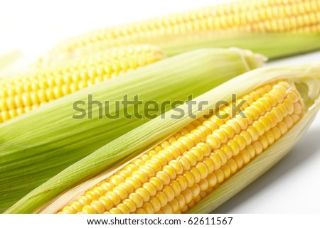 Fresh corn vegetable - stock photo