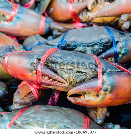Fresh Crab - stock photo